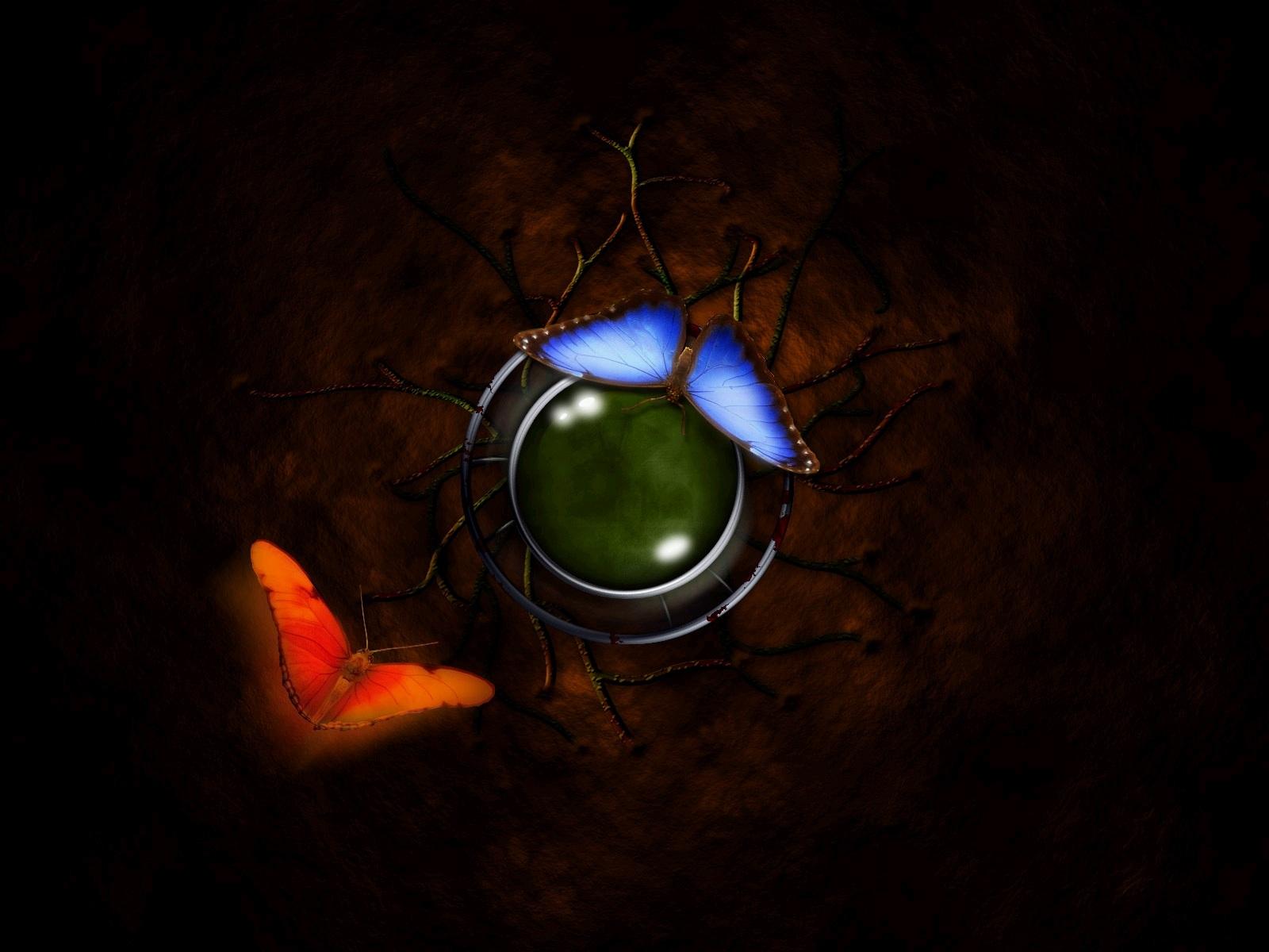 蛾 壁紙 - Moth WALLPAPER