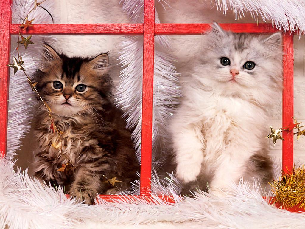 猫 壁紙 - Cat WALLPAPER