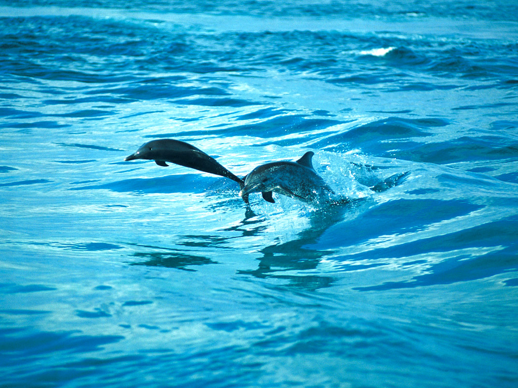 イルカのジャンプ 壁紙 - Dolphin WALLPAPER