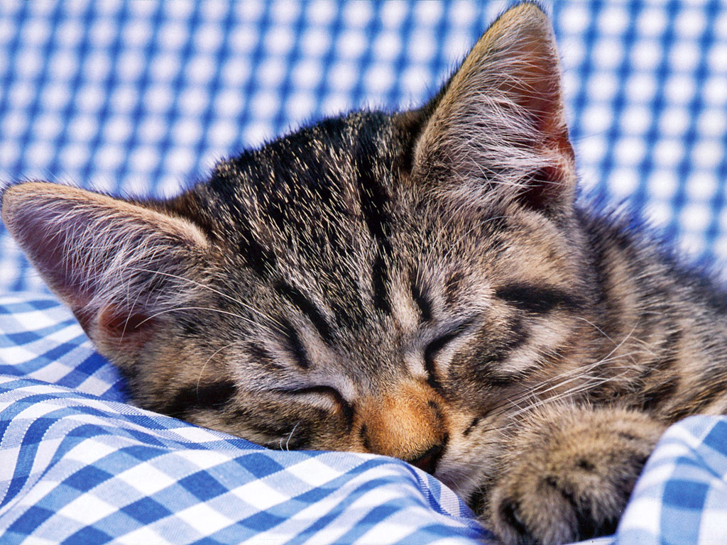ネコ 壁紙 - Cat WALLPAPER