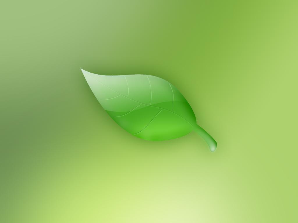 葉っぱ 壁紙 - A Leaf WALLPAPER