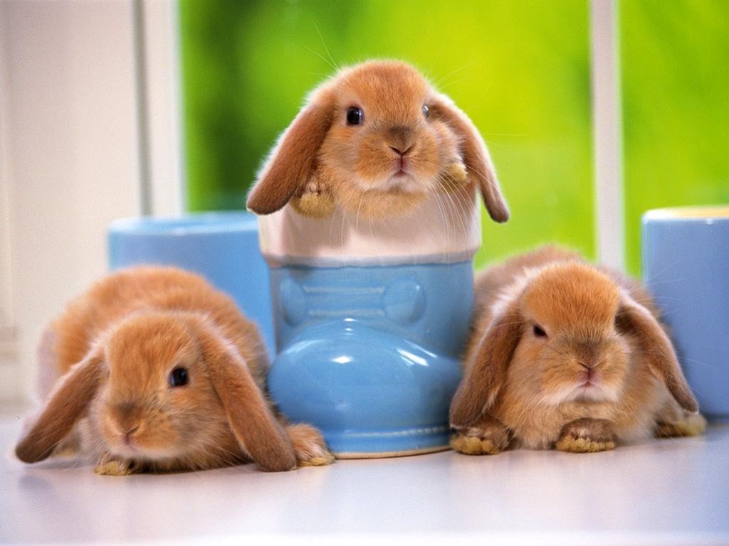うさぎ 壁紙 - Rabbit WALLPAPER