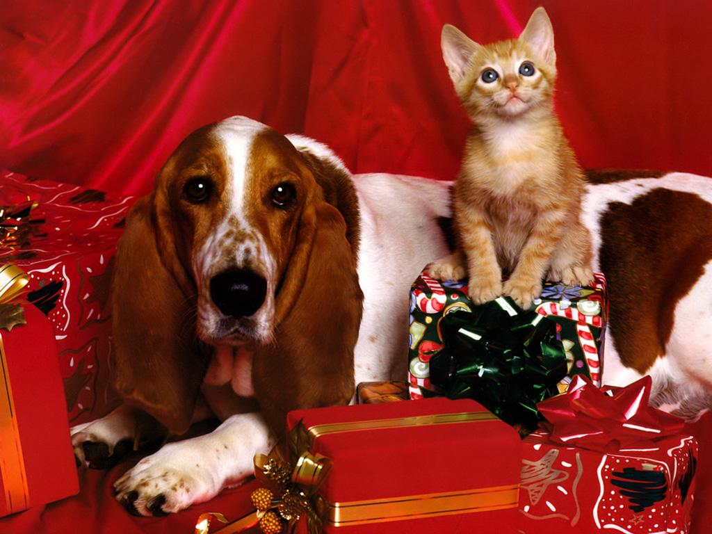 犬猫 壁紙 - Dog and Cat WALLPAPER