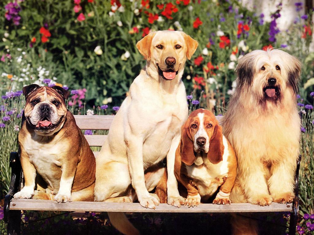 犬 壁紙 - Dog WALLPAPER