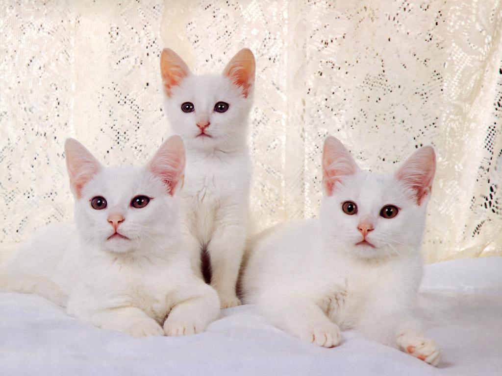 ねこ 壁紙 - Cats WALLPAPER