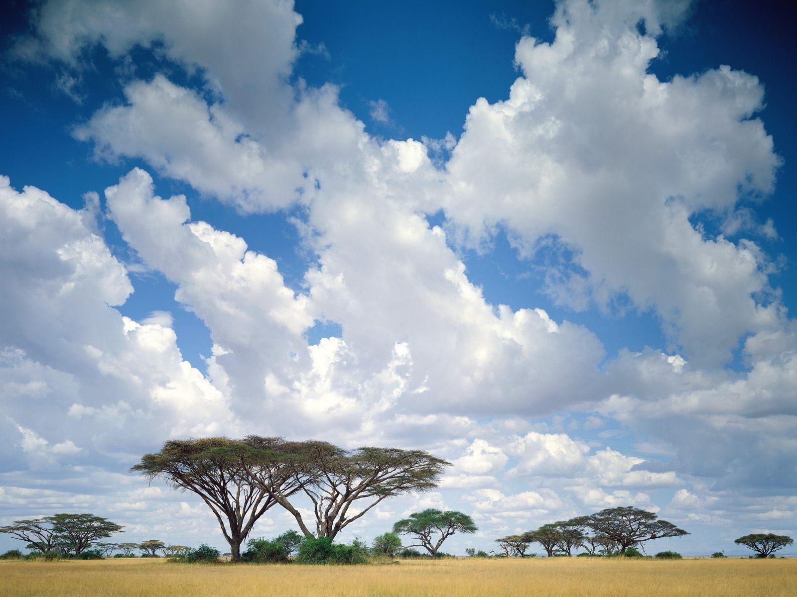 マサイマラ国立保護区(ケニア) 壁紙 - Masai Mara Game Reserve, Kenya WALLPAPER