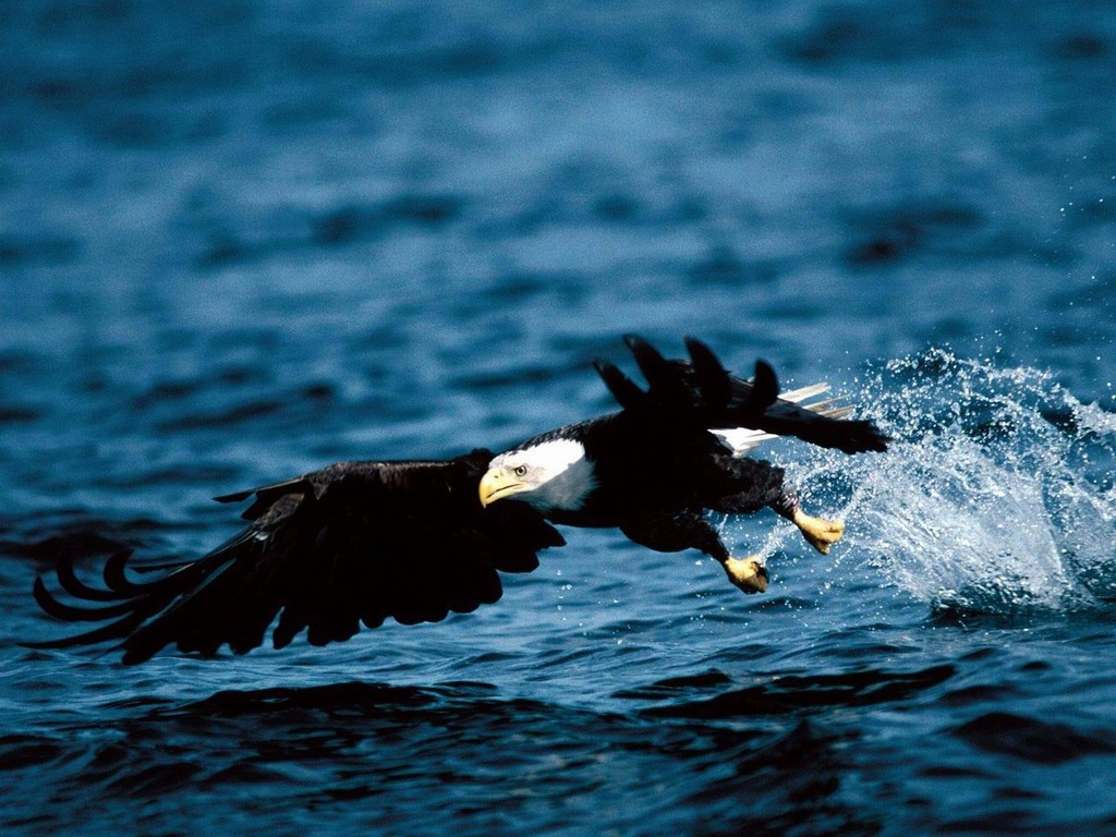 鷹・鷲 壁紙 - Hawk or Eagle WALLPAPER